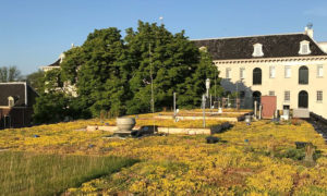 Smart Blue-Green Roofs of Amsterdam: Why you should be interested and how to get involved in the RESILIO project
