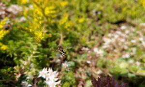 Vlinders, bijen en vogels op een blauw-groen dak